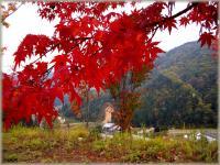 autumn 057