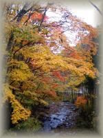 autumn 098
