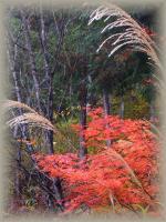 autumn 100
