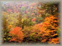 autumn 102
