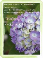hinasanchi 731,jpg