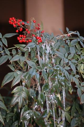 plantofamerica2.jpg