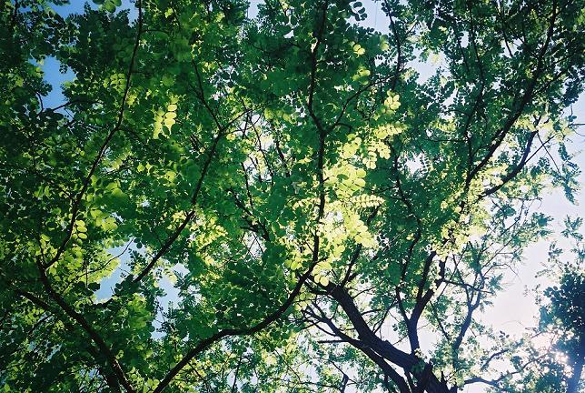 amigotree2.jpg