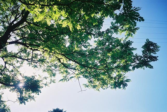 amigotree3.jpg