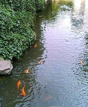 中島公園の近所の川