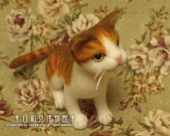 cat0901b.jpg