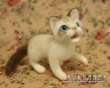 cat0907b.jpg
