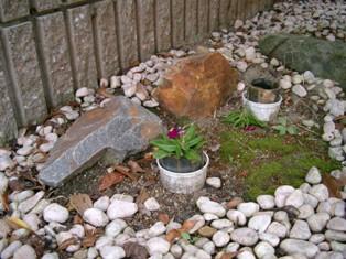 2シマとコロのお墓