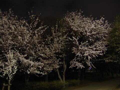 kashiwanoha02.jpg