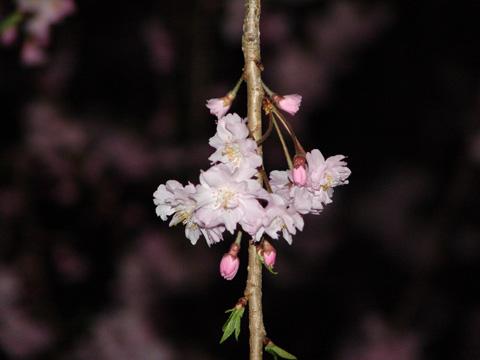 kashiwanoha04.jpg