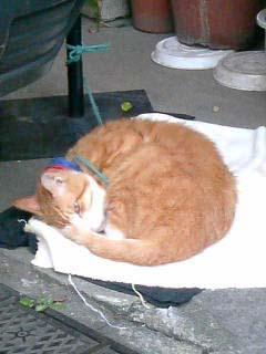 061012_cat.jpg