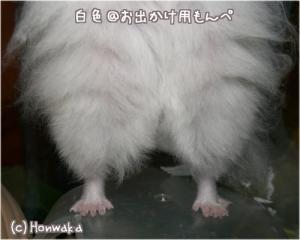 nikki060620-2.jpg
