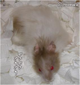 nikki060624-2.jpg