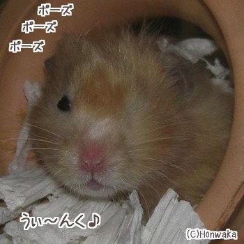 (;^_^A あせあせ