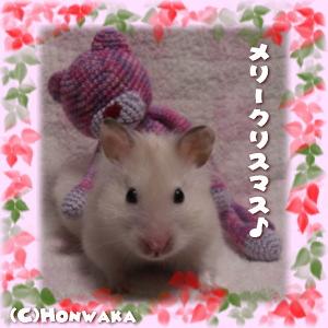 メリークリスマス~♪