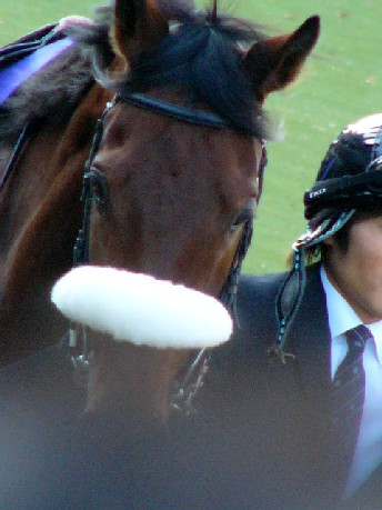 JC2008-MatsuridaGogh01.jpg