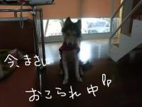 コピー ~ 反省中