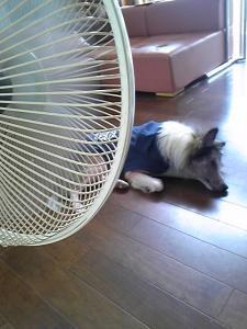 扇風機・・。