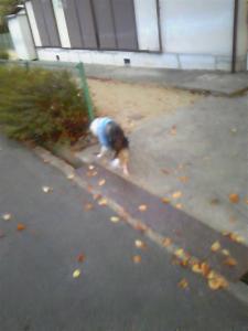 秋のボケボケ