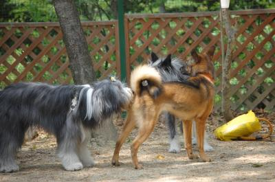 大型犬たち