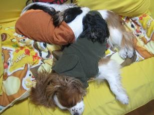 チャオ枕2