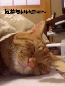 hya-su18.jpg