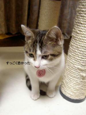 hya-su5-s.jpg