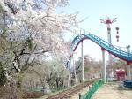 妙高サンシャインランド桜
