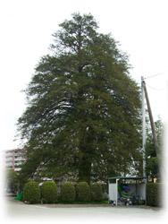 20081005-2マルガミヤ