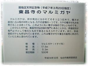 20081005-2マルガミヤ説明