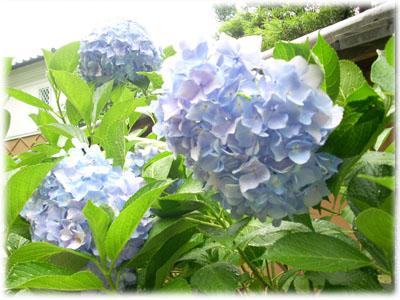 20080624 大豊神社1