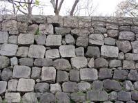 ヌートリアが潜む石垣