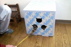 NE-BOX.jpg