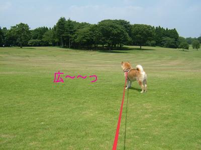 syouwanomori0907168.jpg