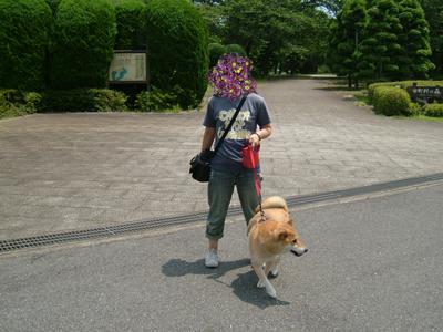 syouwanomori0907169.jpg