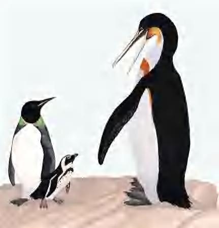 巨大ペンギン