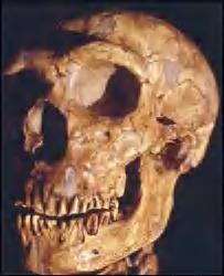 現生人類の祖先 Neanderthals