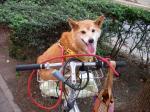 自転車メリー