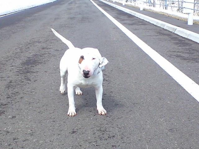 漁師犬 石松
