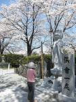 北杜の桜2