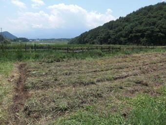 ピッコロ畑1