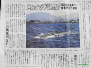 クジラ記事