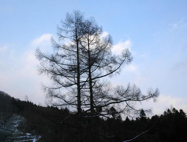 冬山散歩2