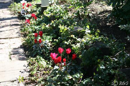 成城花壇4IMG_7541