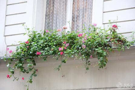 パリの花16IMG_3212