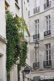 パリの花5小IMG_2453