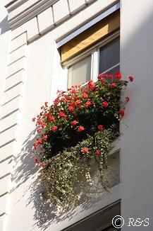 パリの花6小IMG_2454