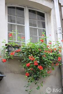 パリの花10小IMG_2497