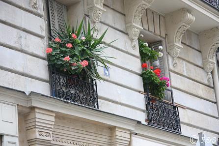 パリの花13IMG_2696