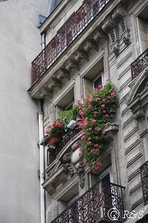 パリの花20小IMG_3447